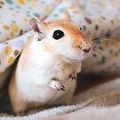 Bacon the Gerbil by Monica Carvalho