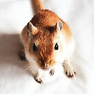 Ginger Young Gerbil by Monica Carvalho
