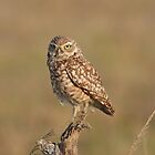 Burrowing Owl by kathy s gillentine