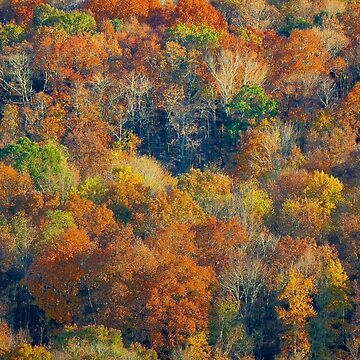 Autumn In The Hills by RickDavis