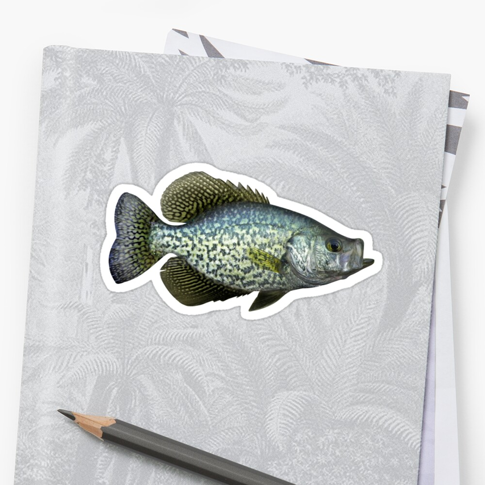 Black Crappie by William Lee