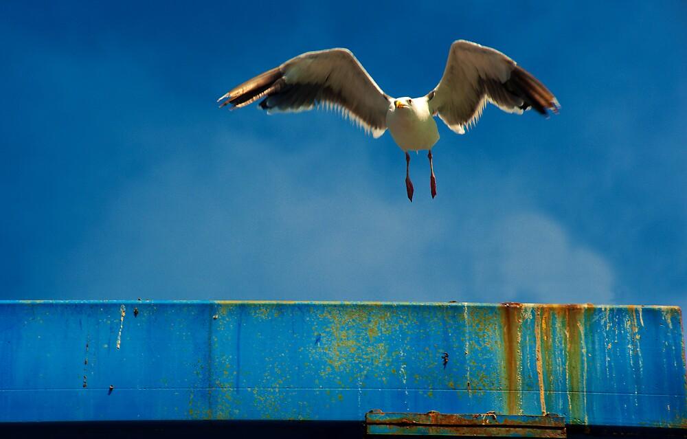 Take off by Eyal Nahmias