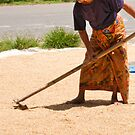Drying Rice at the Roadside by Werner Padarin