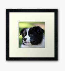 New Baby Trinitee Framed Print