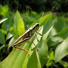 Grasshopper Green for the Love of Nature 2 by Barberelli