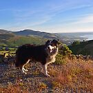 Views with Laddie by Michael Haslam