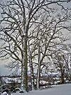 Snow Trees by FrankieCat