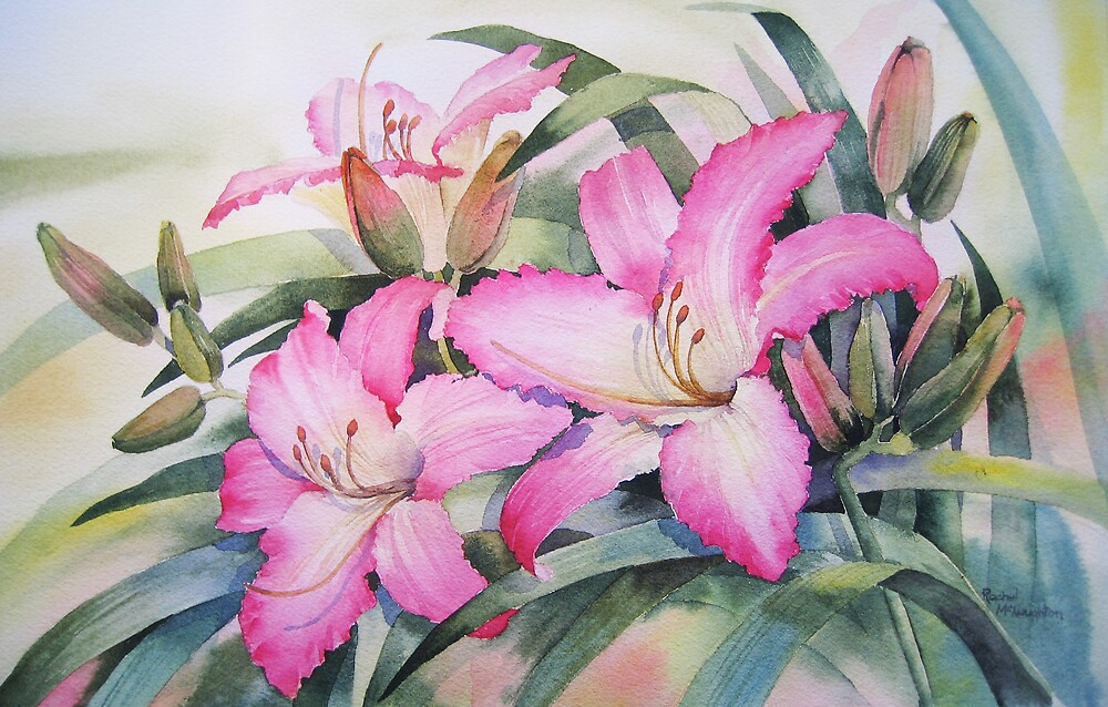 Pink Day Lilies by artbyrachel