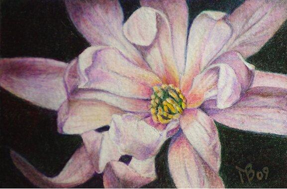 Star Magnolia Tree Blossom by Magaly Burton