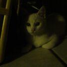 Cat Shadows by Carolyn Perrick