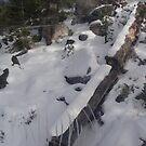 Snowy Log by Carolyn Perrick