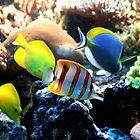 the fishtank by redscorpion