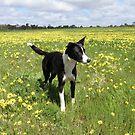 Ellie in a field of Sunshine by Coralie Plozza