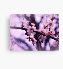 Sakura (4) Canvas Print