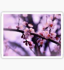 Sakura (4) Sticker