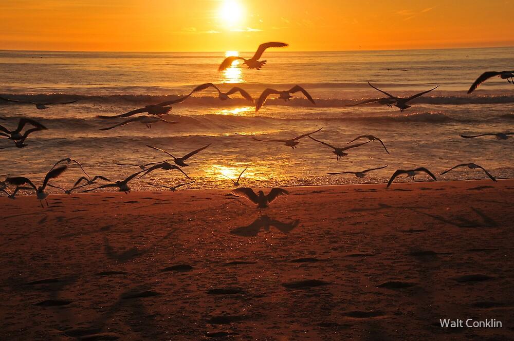 Sea Gulls by Walt Conklin