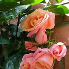 Roses Sleeping in the Sunshine by Kathryn Jones