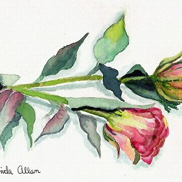 Two Pink Roses Watercolor Print by Lallinda