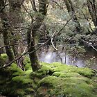 Mossy bank , Enchanted Walk, Cradle Mountain, Tasmania, Australia. by kaysharp