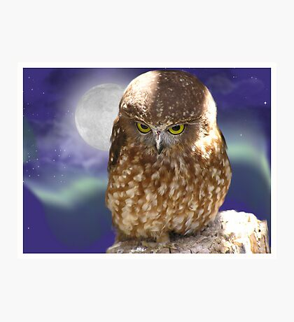 Whoooo me, okay , I did it for a hoot... Photographic Print