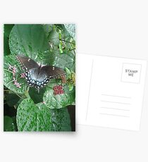 That September in the Rain Postcards