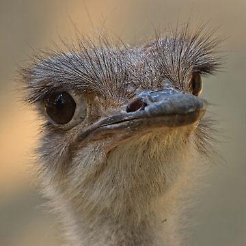 Animal Portrait - Ostrich (1) by ausigreybear