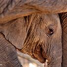 LIVE, LOVE, DREAM AND PASSION - THE AFRICAN ELEPHANT - Loxodonta africana by Magriet Meintjes