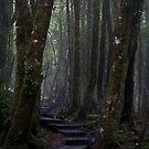 Fangorn Forest Walk by Jenna