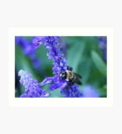 Do bees hybernate? Art Print