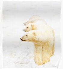 The 3 Bears of Churchill Poster