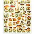 Champignons Mushrooms Chart by evolucion