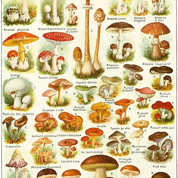 Champignons Mushrooms Chart by evolucion