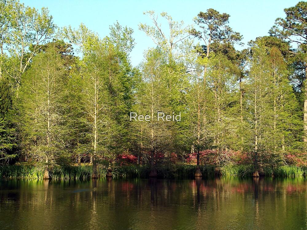 Spring Cypress by Ree  Reid