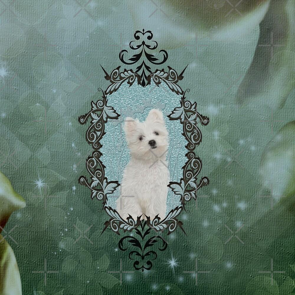 Cute little maltese puppy by nicky2342