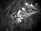 Little Bee by Shelly Harris