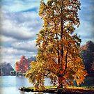 Golden Reflections, Stourhead Gardens by Amanda White