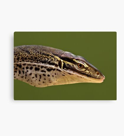 Papuan Sand Monitor Canvas Print