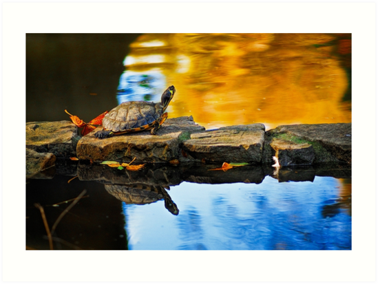 Turtle on the stone by Pino Esposito