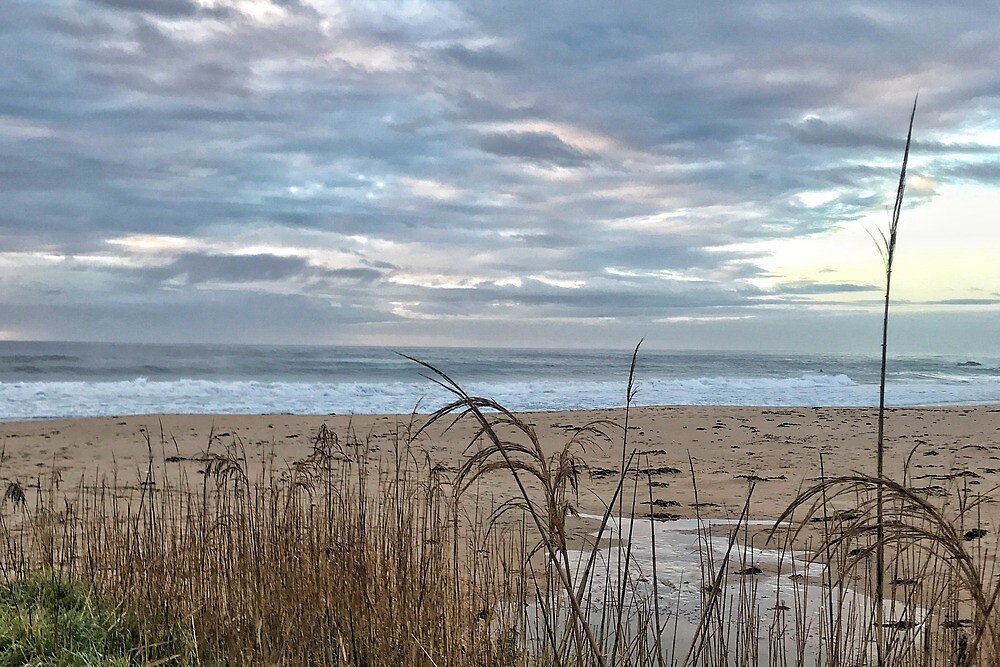 grass and beach at sunrise by Michelle Swan