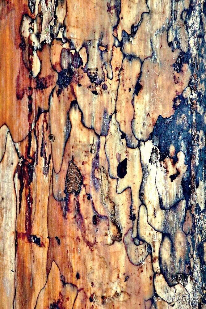 Tree Bark 1 by CarolynAGates