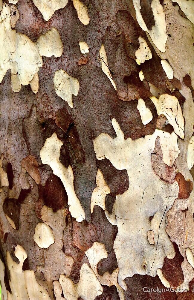 Gum Tree Bark by CarolynAGates