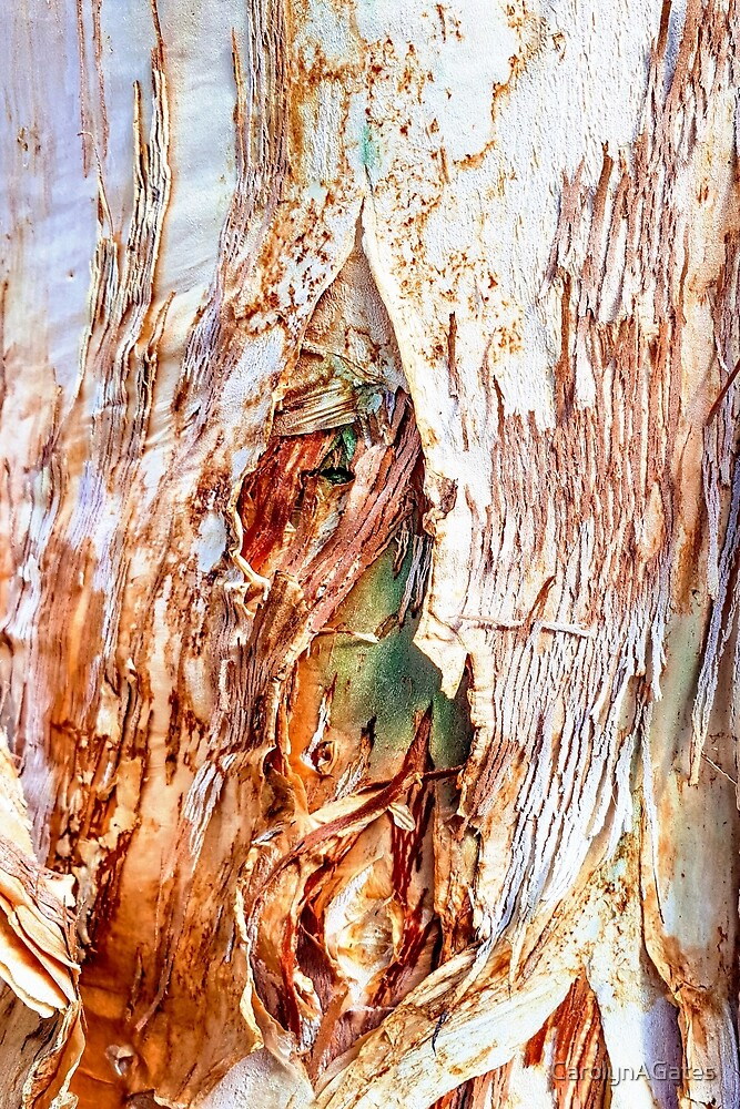 Paper Bark 2 by CarolynAGates