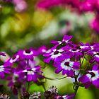 Purple Flowers by COartistMB