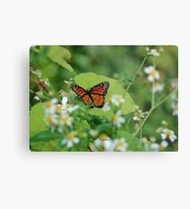 Viceroy Butterfly - Limenitis archippus Metal Print