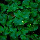 Leaves #1 by Josef Grosch