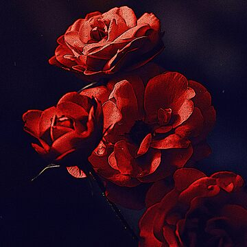 RED ROSE WITH BLACK BACKGROUND  by Fawad4real