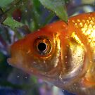 fishy eye by Loreto Bautista Jr.