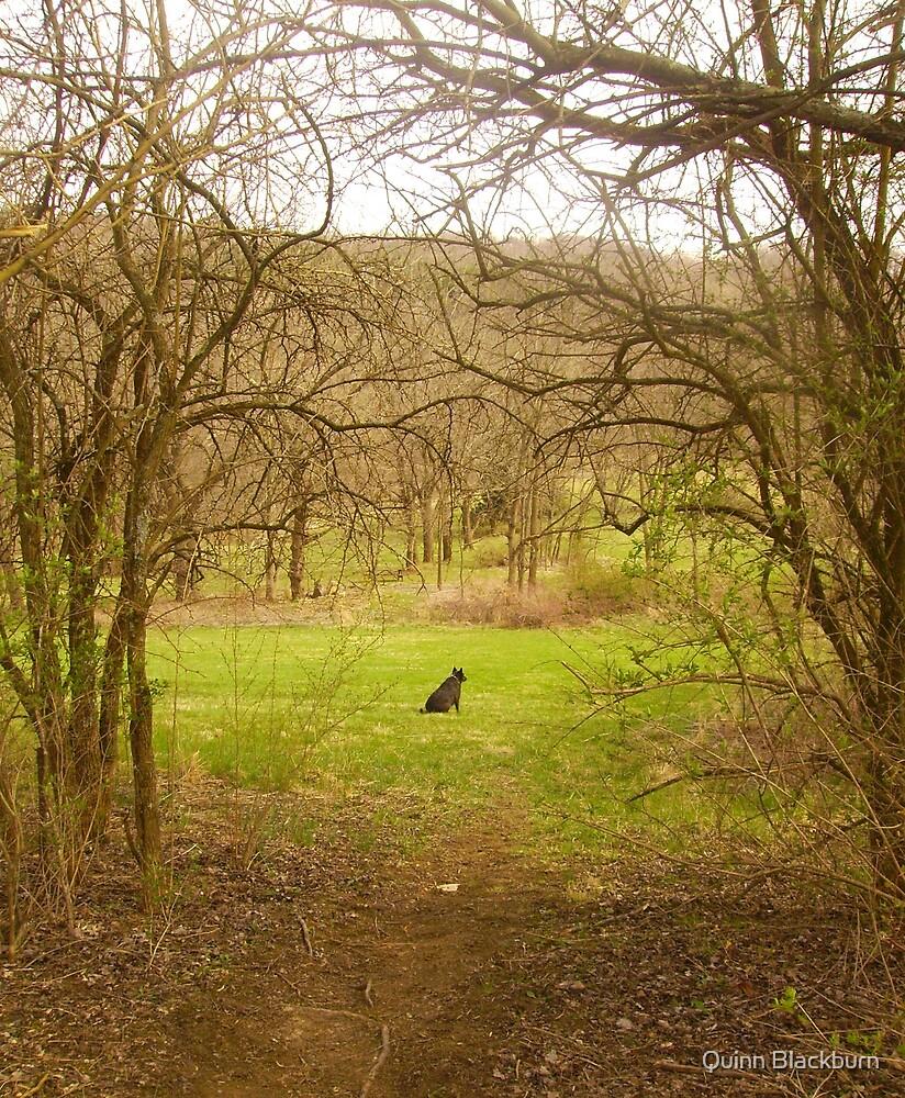 Faithful Heart Waiting at the Gate by Quinn Blackburn