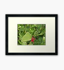 Cloudless  Sulpher Framed Print