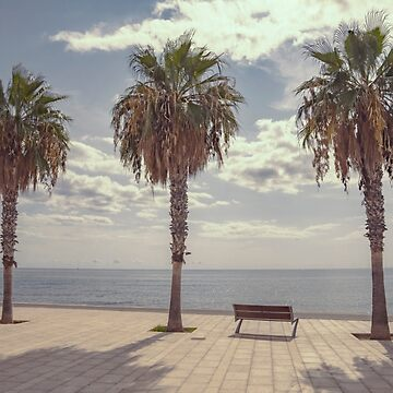Palm trees in Palma de Mallorca, Spain by ibphotos